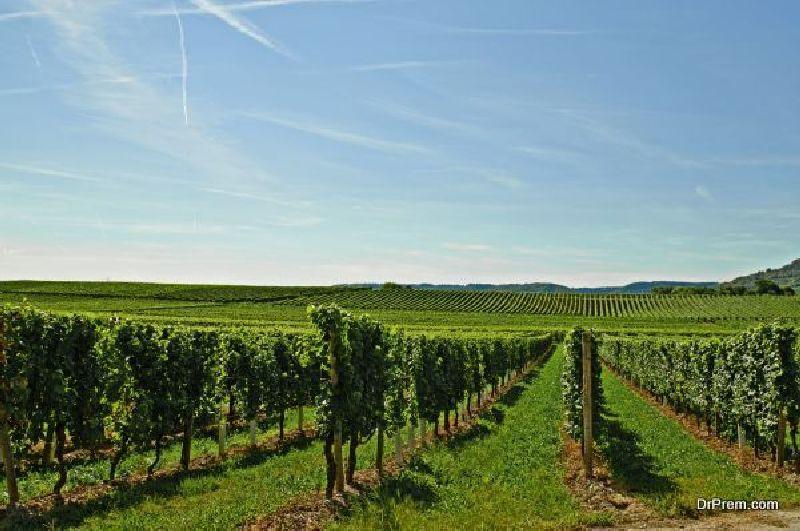 StellenboschSouth Africa's Wine Region