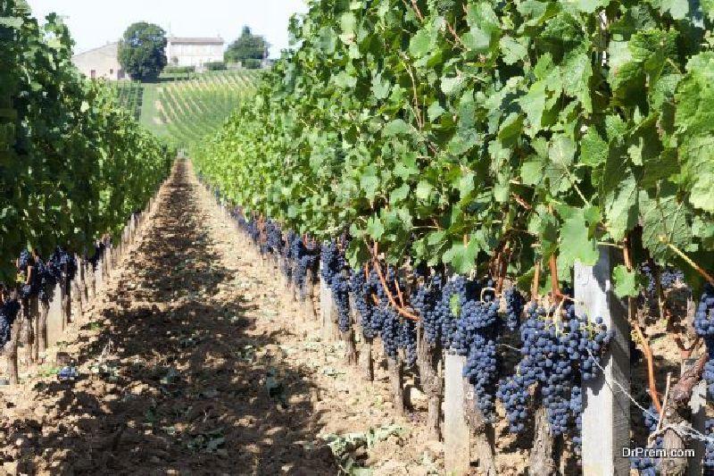 Madrid Wine Tasting
