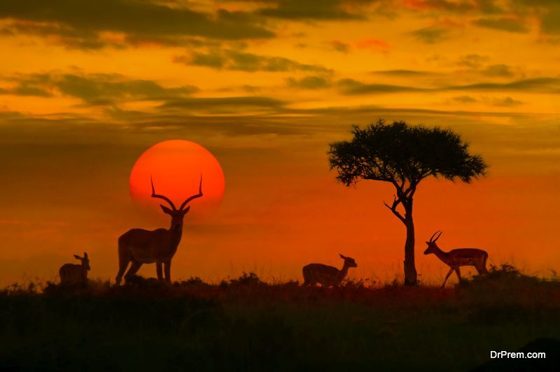 African-Safari-with-Family