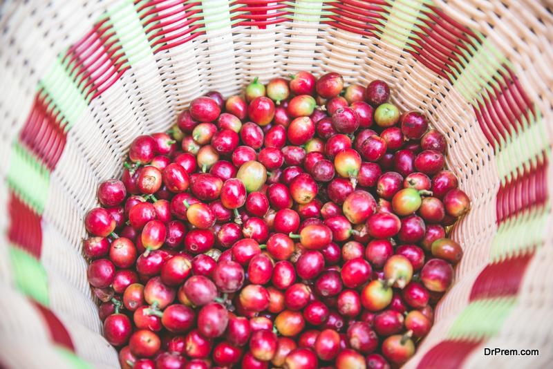 organic coffee plantations