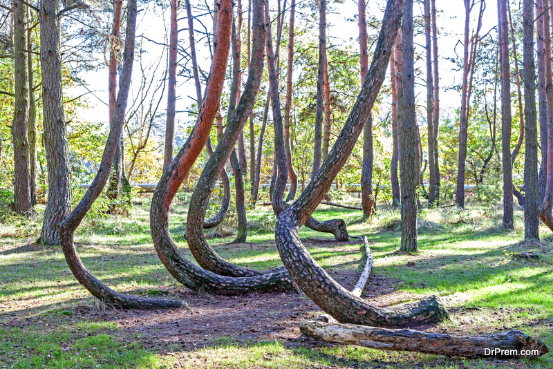 Crooked-Forest-Poland