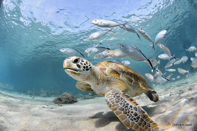awesome marine life
